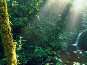 The Monteverde Cloud Forest Reserve is a beautiful forest.
