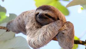 Check out this beautiful sloth in La Fortuna?