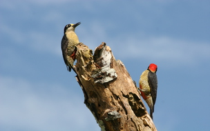 Costa Rica is truly a bird-watchers paradise, don´t  miss out!