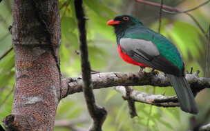 See wildlife at Palo Verde National Park!