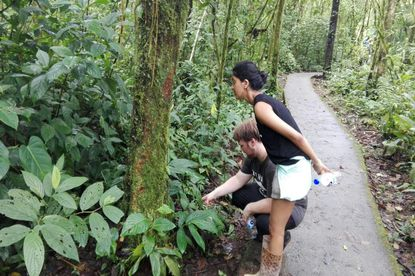 Interesting things to see on the Arenal Volcano hike.
