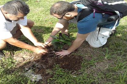 Planting a personal coffee bean seedling