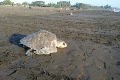 Go see turtles when you stay at Nammbu.