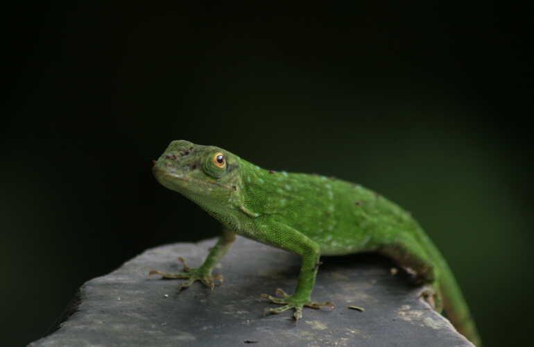 See plenty of wildlife on the Arenal ATV tour with Desafio.