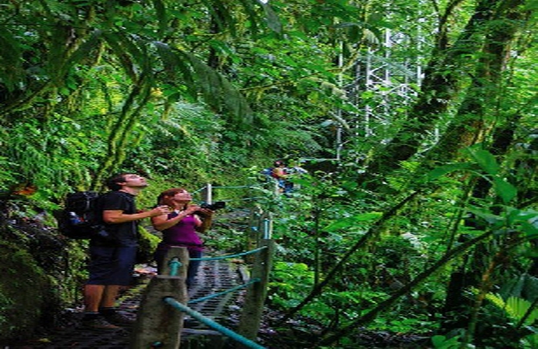 Looking for animals and birds in the rainforest