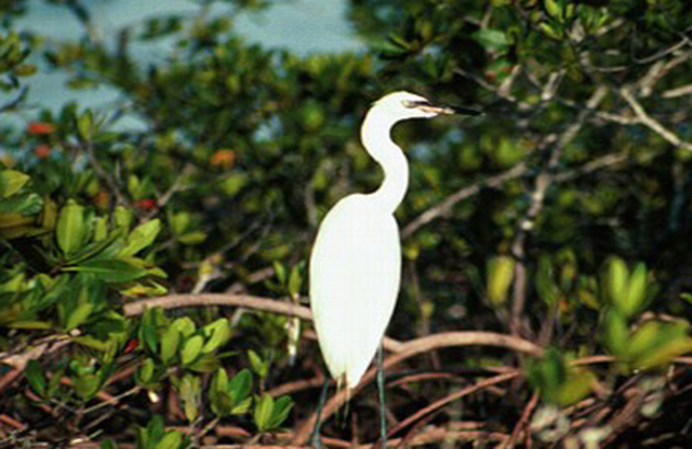 Great birdlife on Safari float with Desafio.