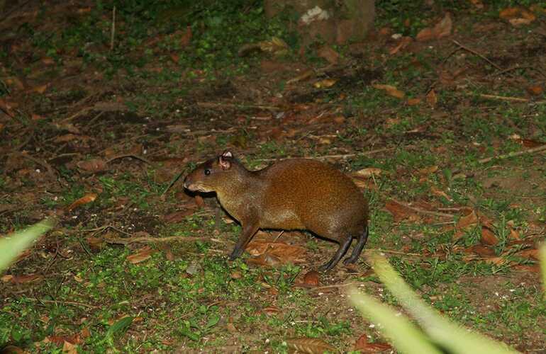 Arenal Natura Guided Night Walk
