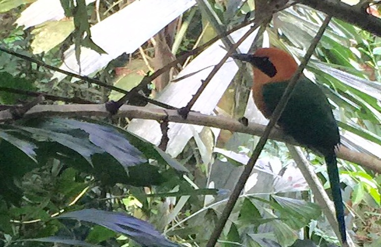 See amazing birds in Arenal for birdwatching.