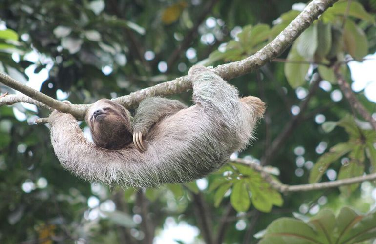Interesting animal life in EcoCentro Danaus with Desafio.