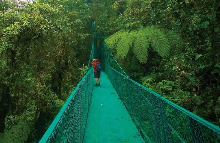 Monteverde One Day Tour Selvatura Hanging Bridges and Zipline Combo