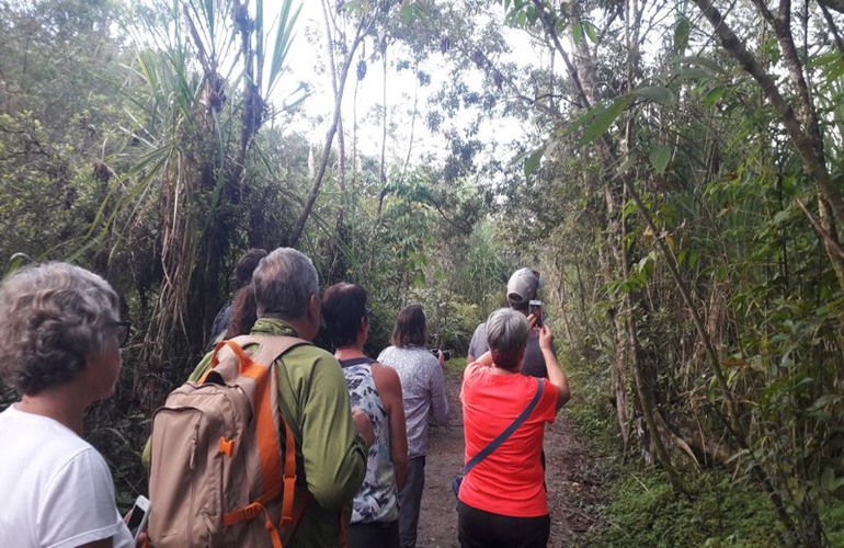As it starts to get dark, the Monteverde Cloud Forest comes alive!