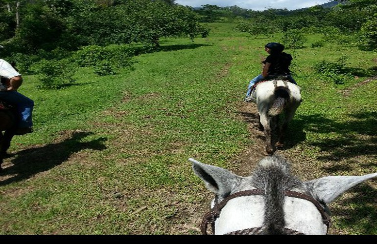 Private Horseback and La Fortuna Waterfall Tour Costa Rica