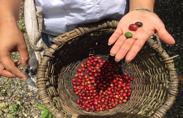 San Jose Day Tour: Doka Coffee Plantation, Poas Volcano & La Paz Waterfall
