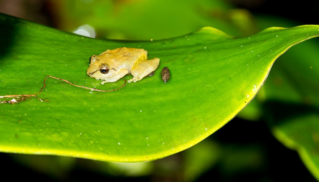 Arenal Natura Guided Night Walk