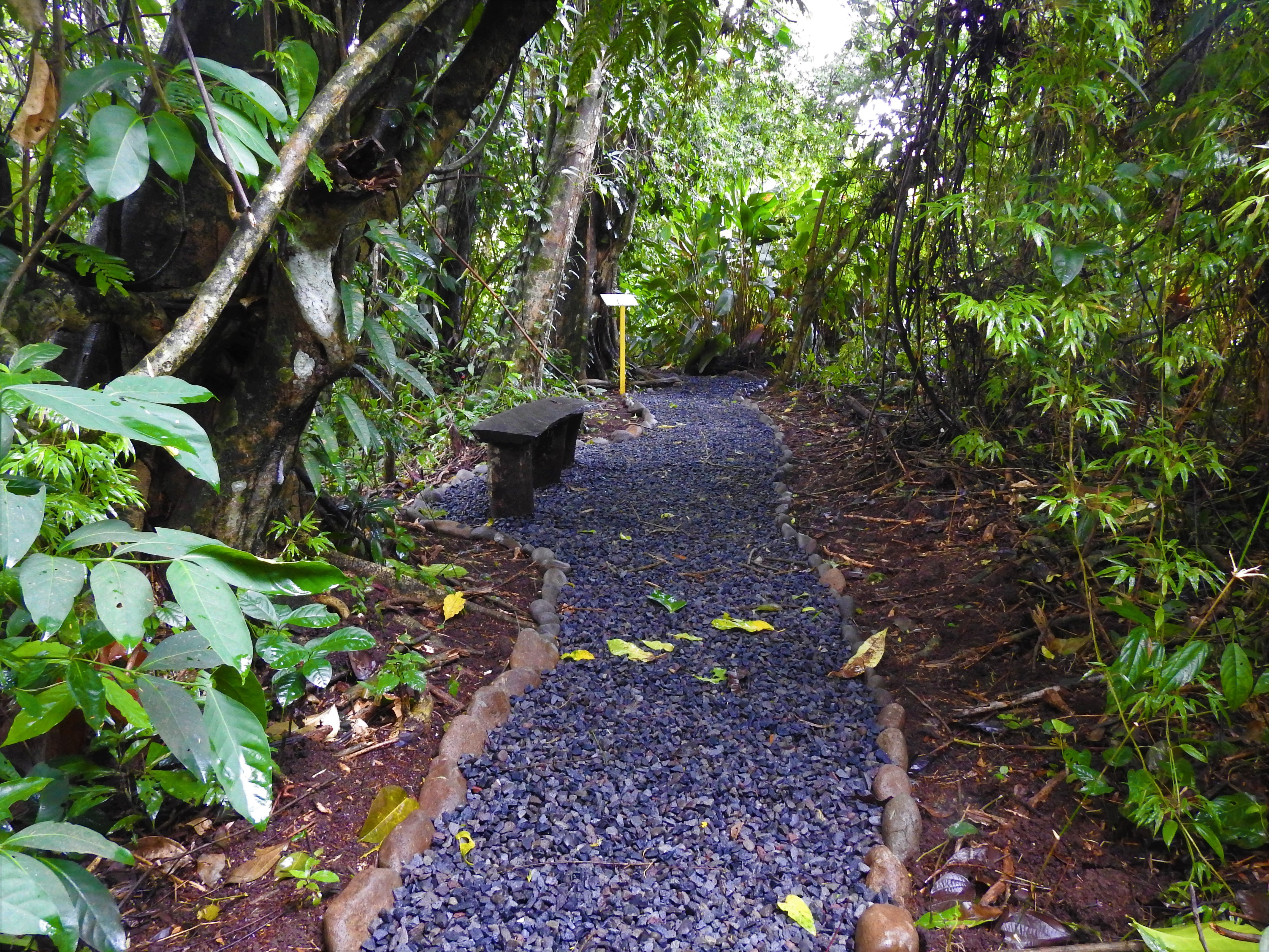 Beautiful trails to see sloths in La Fortuna?