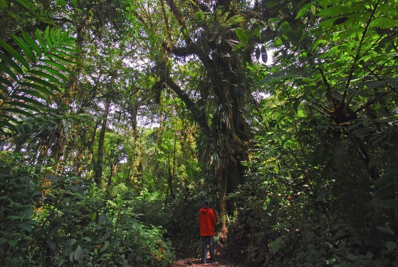 Hiking in the Monteverde Cloud Forest for a night hike.