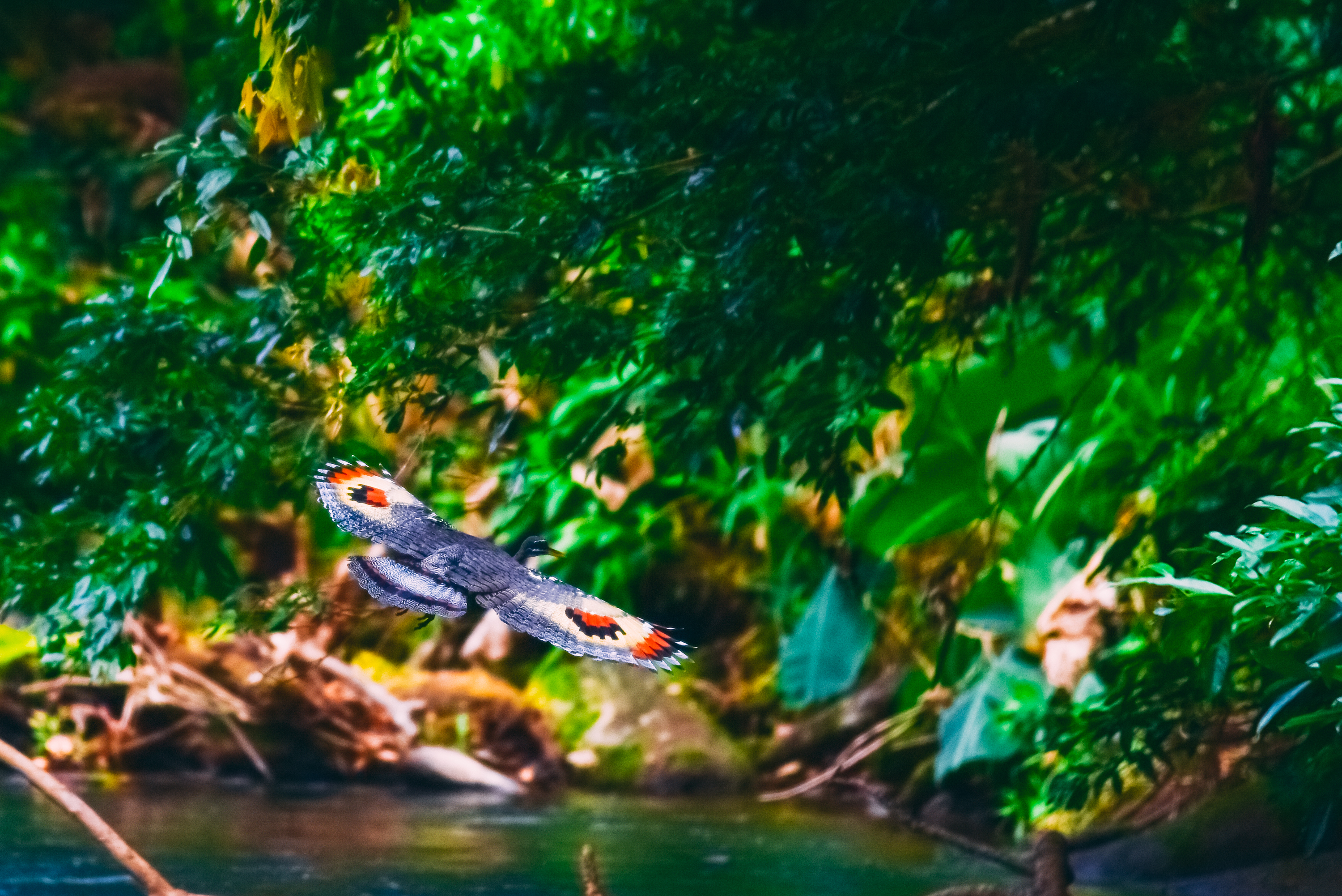 A great way to see birds in Costa Rica - whitewater and wildlife Jungle Safari Float with Desafio.