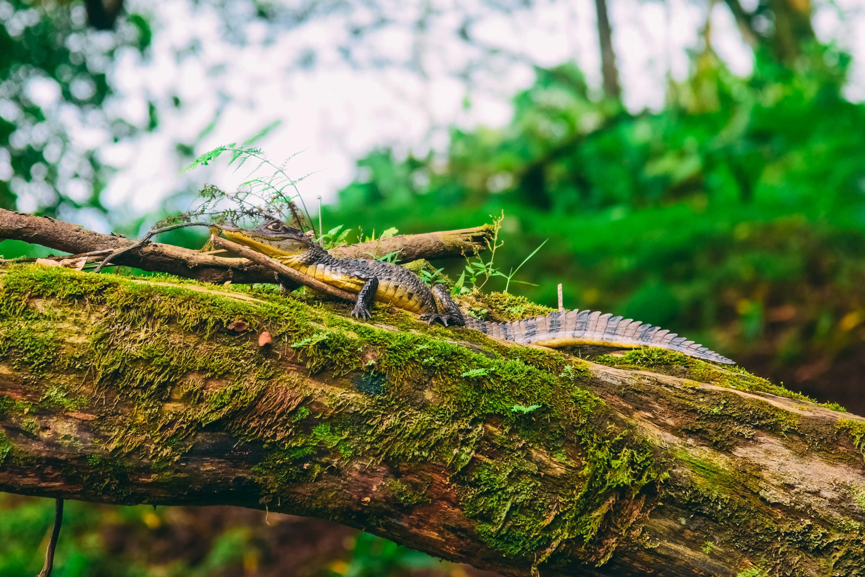 Wildlife Tours in Costa Rica!