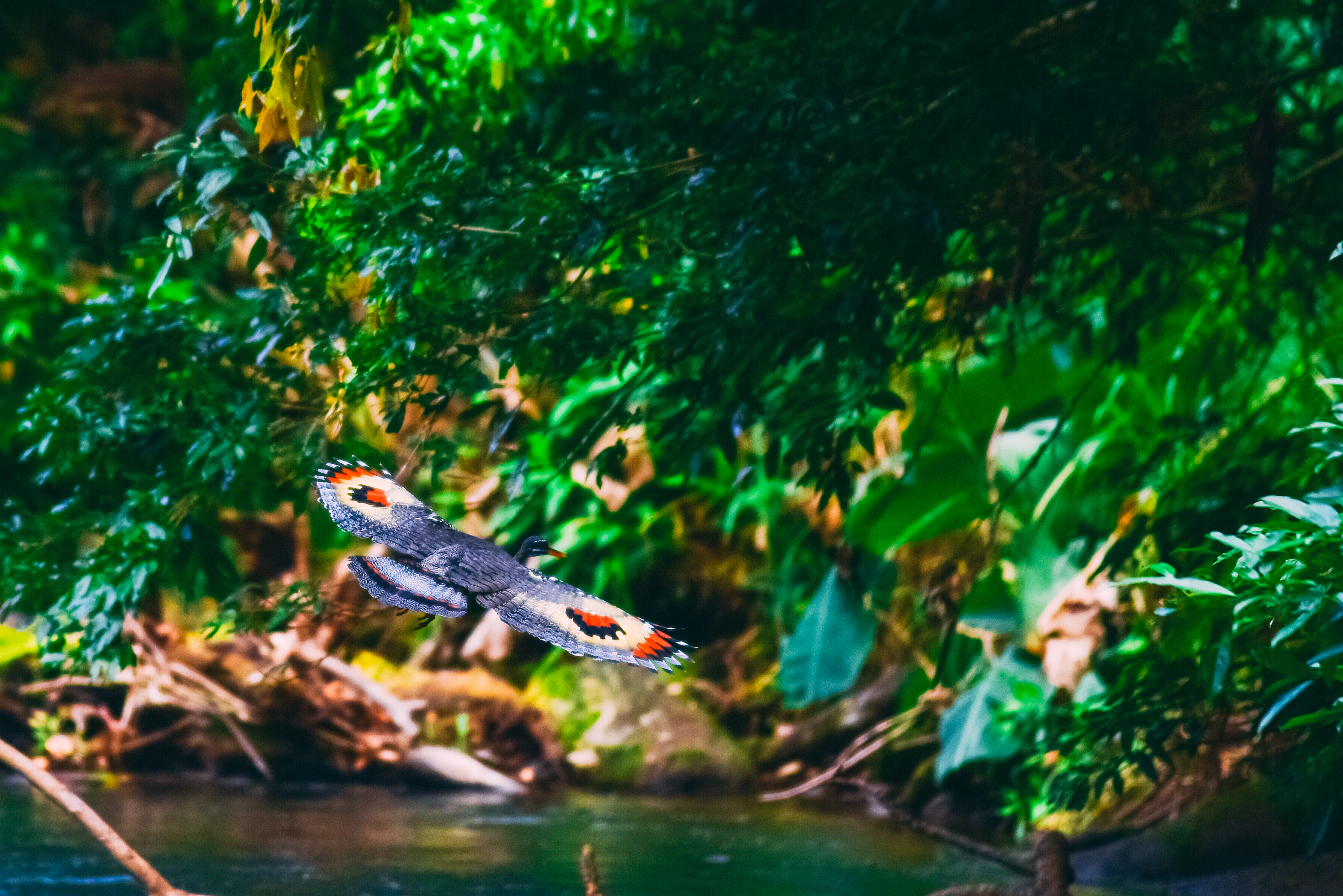Your eagle-eyed guide will show off Costa Rica amazing wildlife as he points out a wide array of plant and animal species