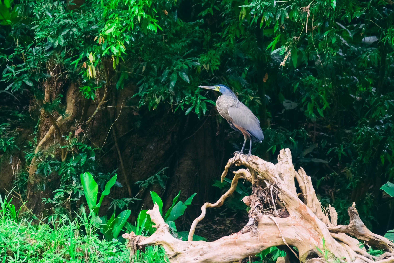 Amazing Wildlife In Costa Rica! Rainforest