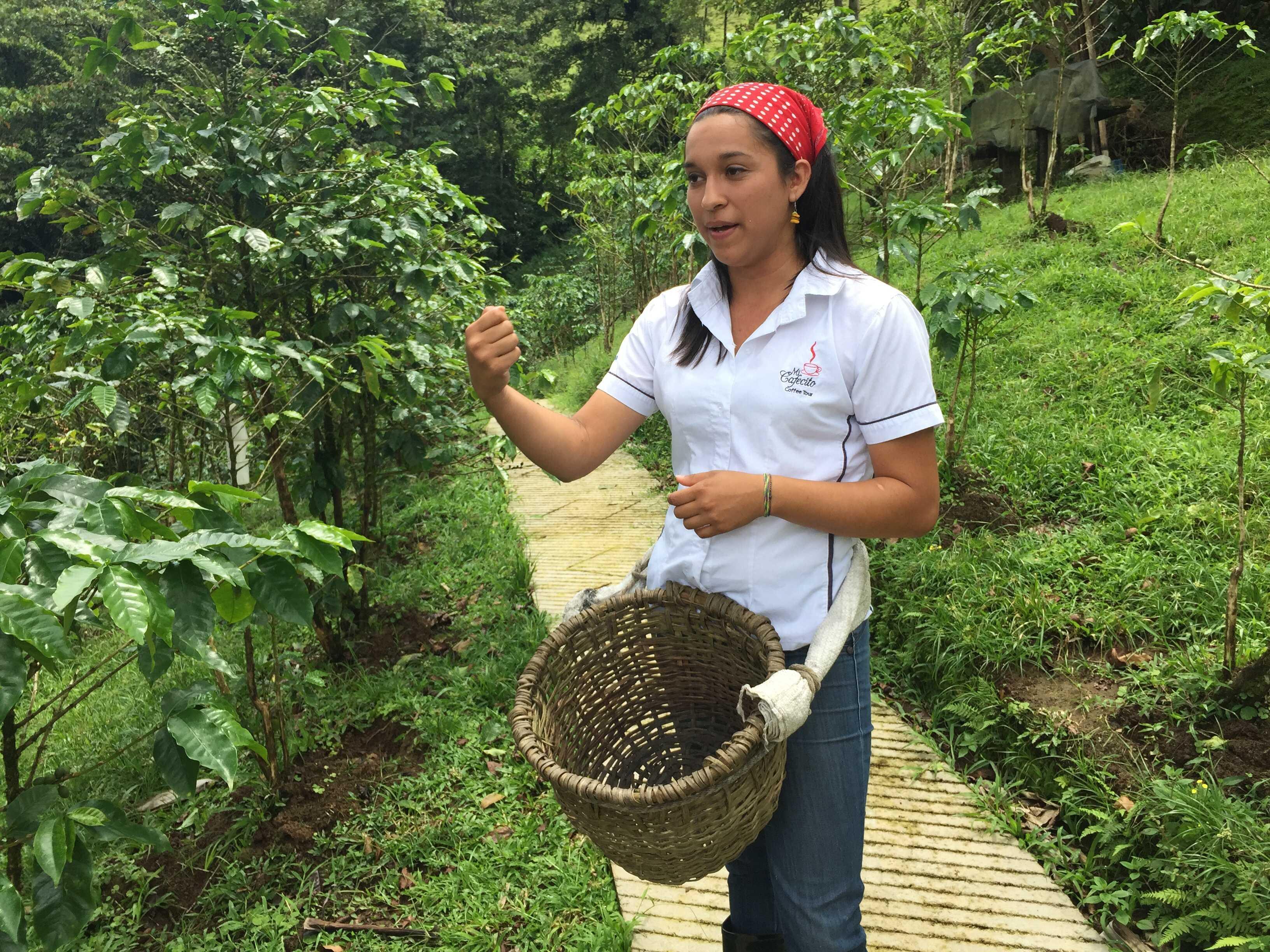 San Jose Day Tour: Doka Coffee Plantation, Poas Volcano & La Paz Waterfall