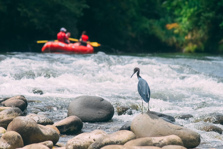 Safari Float Adventure. Perfect for Nature Lovers.