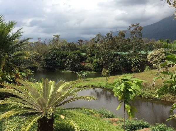 Lovely ponds in a farm environment at Arenal Manoa Resort and Hot Springs. Desafio can help you get all the best rates on hotels, transportation and adventures in Arenal and anywhere in Costa Rica!