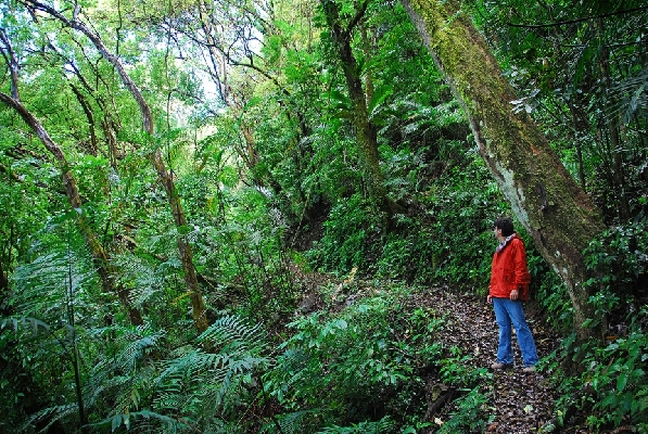 Monteverde Cloud Forest in Costa Rica!
