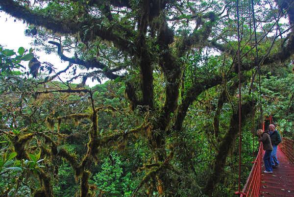 Exploring the Hanging Bridges near Cala Lodge, Monteverde.