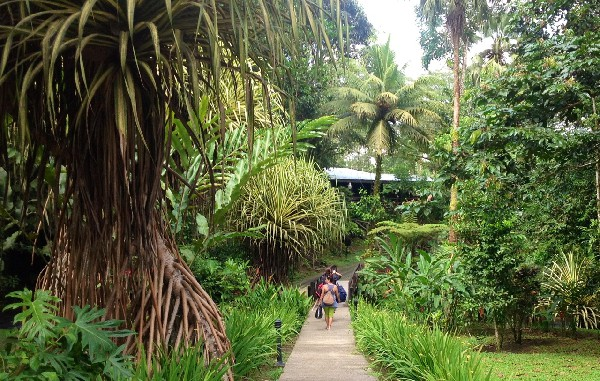 One of the many jungle paths that winds throughout the property.