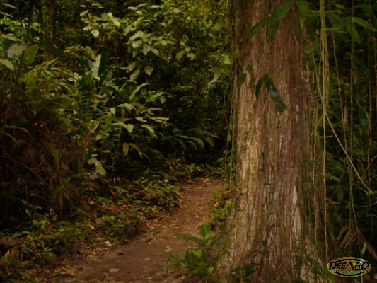 Arenal Volcano Rainforest & Natural History tour!