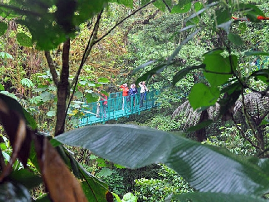 Hanging bridges in Costa Rica!