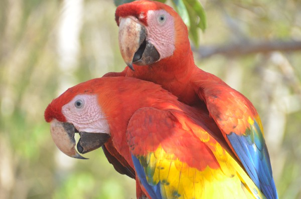 There is love in the air on your Costa Rica Honeymoon!