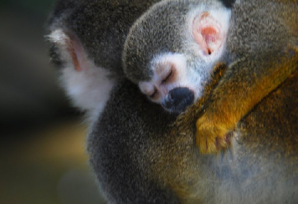 See the tenderness of the wildlife in Manuel Antonio on your romantic getaway to Costa Rica.