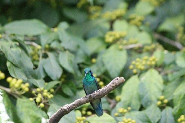 In Monteverde Cloud Forest you will see different types of birds and animals!