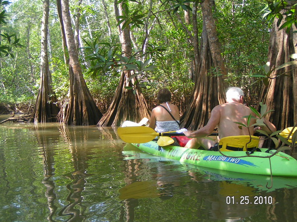 Kayaking through mangroves on the Damas Island Kayaking Tour in Manuel Antonio