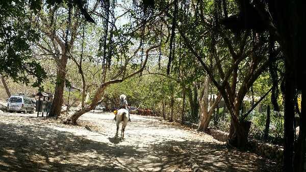 Costa Rican cowboy riding through Don Juan Organic Farm