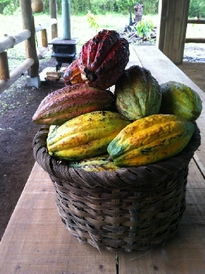 An amazing Chocolate tour in Costa Rica!