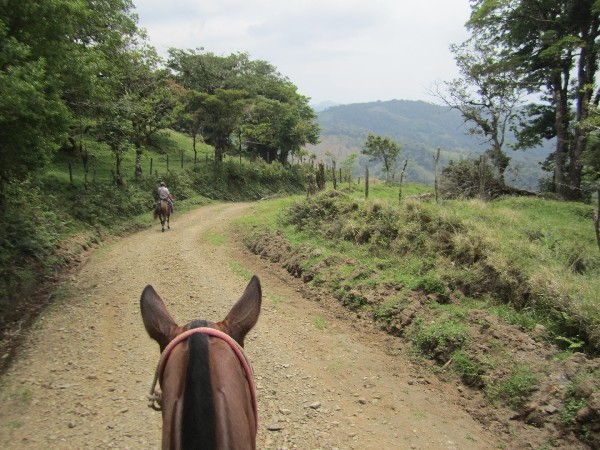 We use great horses in Costa Rica up in Monteverde.