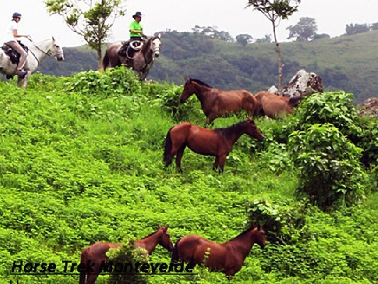 Rounding up the horses in Monteverde.