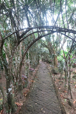 Hotel Los Lagos offers lots of cool walking trails at the base of the Arenal Volcano. Desafio can help you plan your trip to Costa Rica!