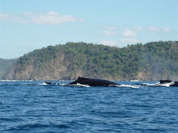 Lucky enough to see whales on the Catamaran Boat Tour in Manuel Antonio Costa Rica.