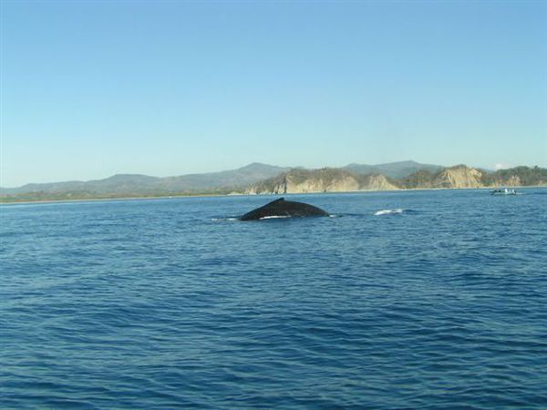 Whale watching in Marino Bellena National Park, Costa Rica.