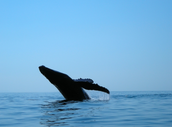 Whale watching in Marino Bellena National Park.