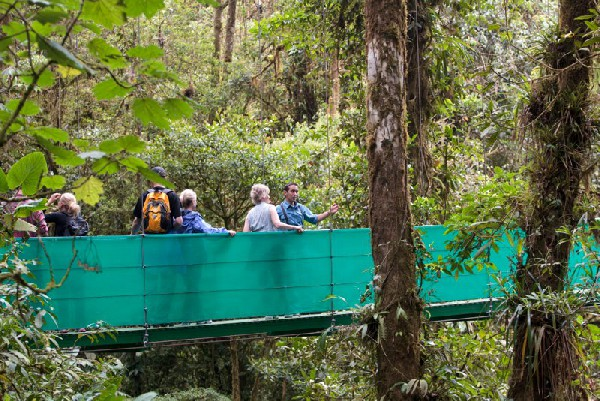 See the beautiful and world famous Monteverde with your nature guide