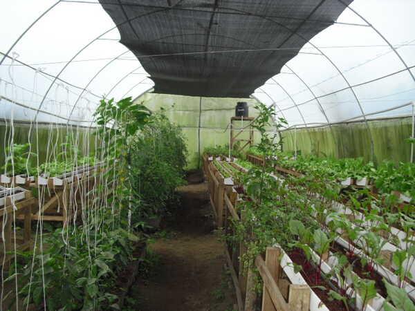 The Don Juan organic greenhouse garden.