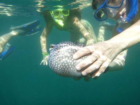 Snorkeling in Samara & Carrillo