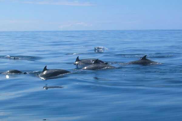 Samara Beach Dolphin Viewing