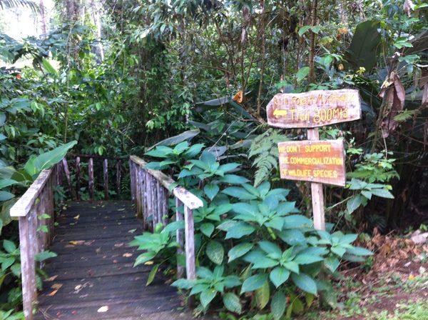 One of the many rainforest trails at the Eco Lodge.