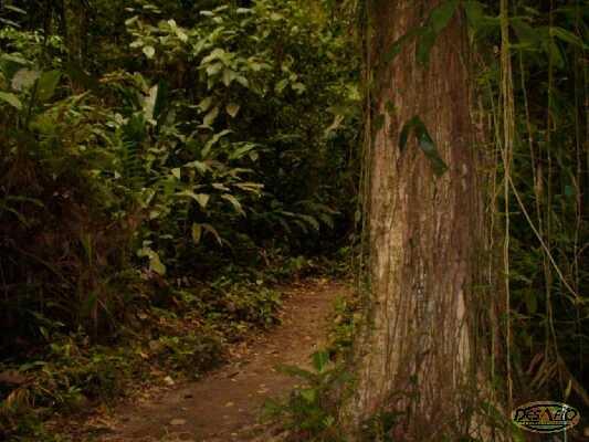 Hiking through paths that weave through the lush Costa Rican Rainforest!